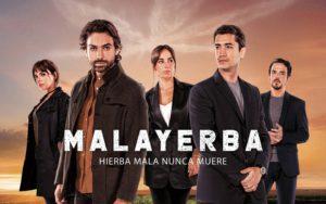 malayerba 01